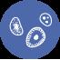 MRSA és más rezisztens baktériumok